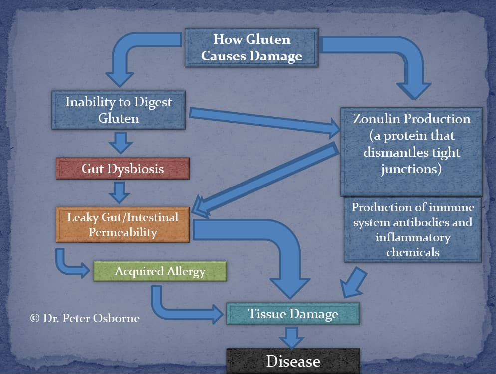 How Gluten Causes Damage