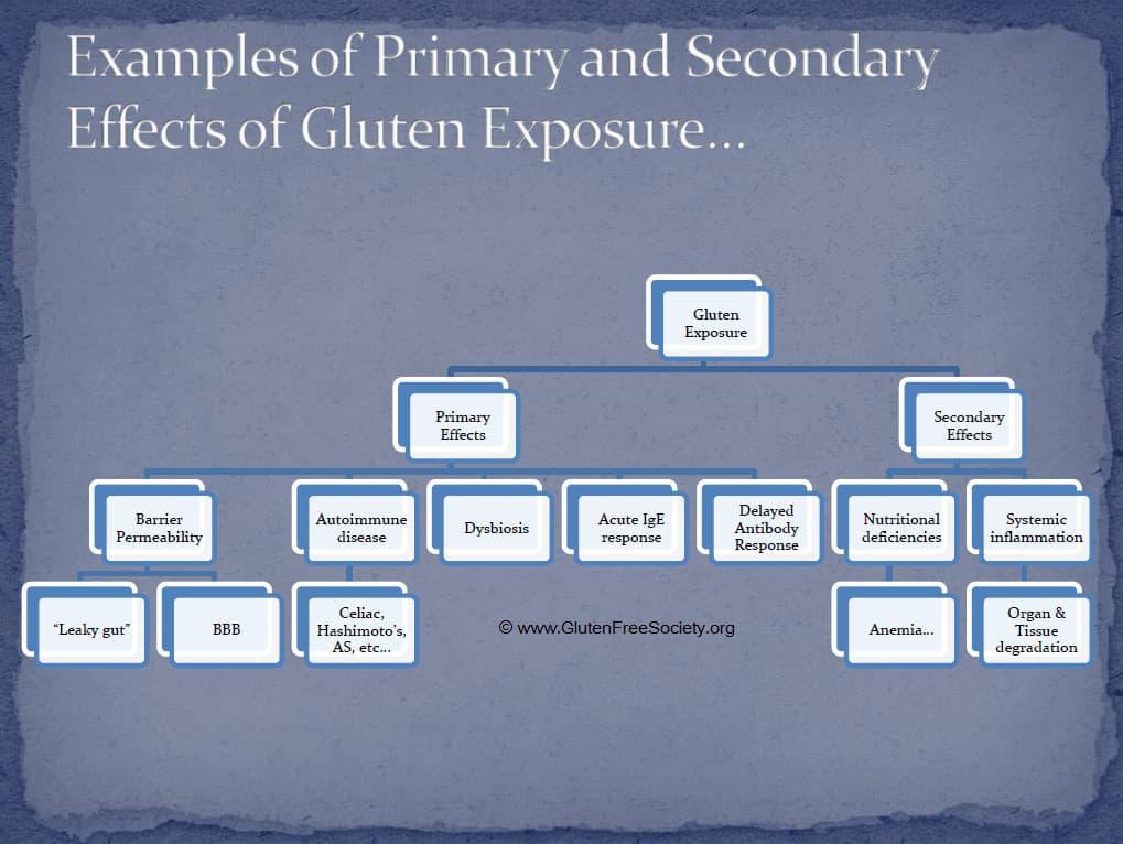 induced damage of gluten