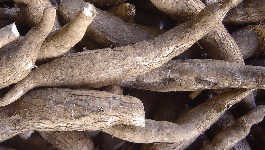 grain free - cassava root makes tapioca flour