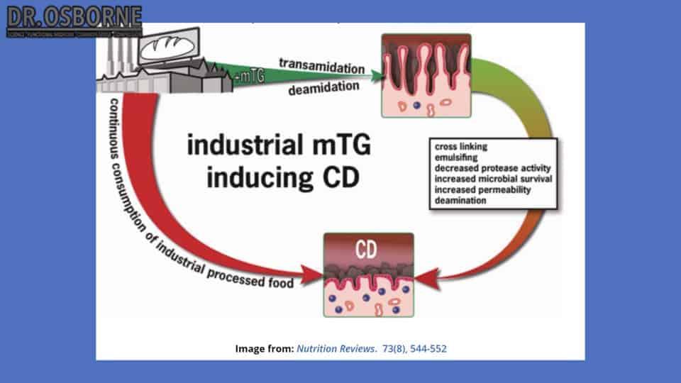 mTG inducing celiac disease