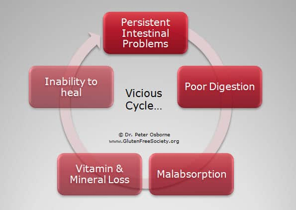 GI Damage Cycle - Gluten