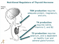 Thyroid Nation - Gluten