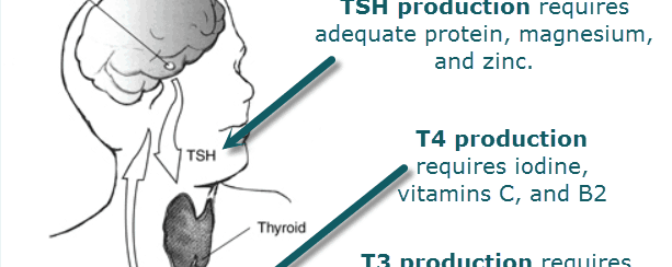 Thyroid Nation - Gluten