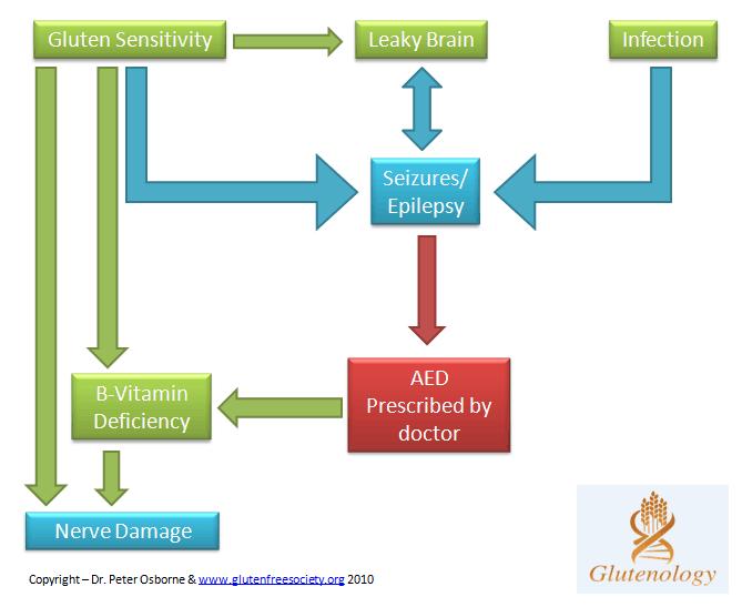 Seizures and Gluten Diagram