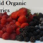 Wild Organic Berries - Gluten Free