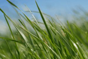 asthma grass and gluten