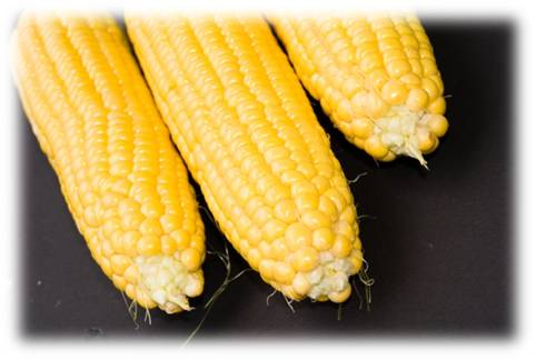 corn gluten - Is Corn Gluten Really Safe For Those With Gluten Sensitivity?