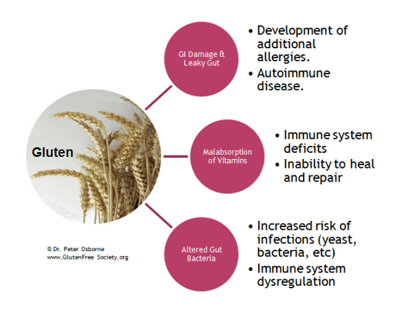 immune system and gluten